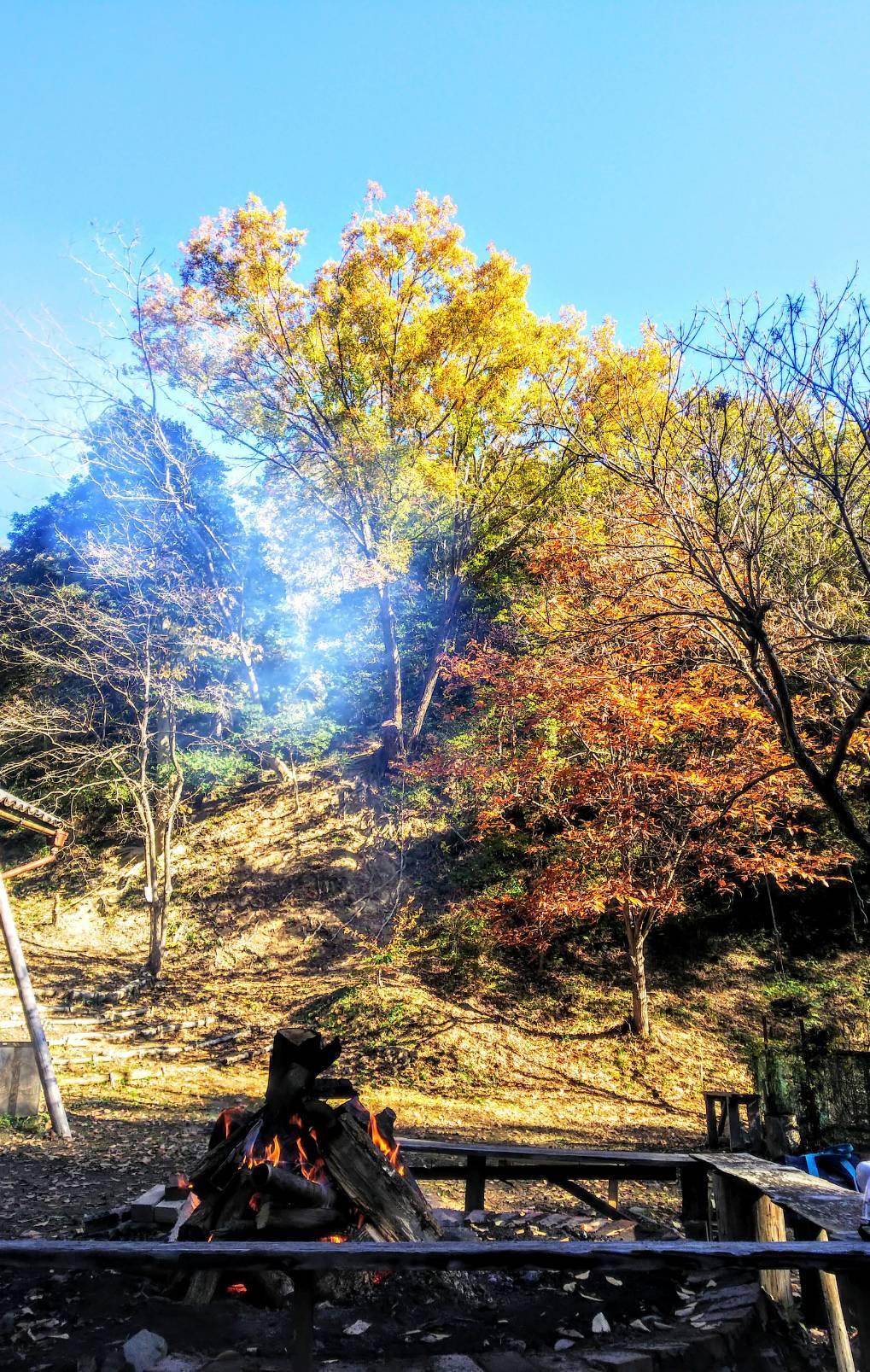 海への眺望を目指して〜尾根の間伐と魅力的な森整備〜_c0239329_18080447.jpg