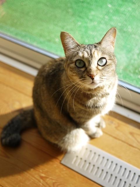 猫のお留守番 うたちゃん編。_a0143140_23002897.jpg