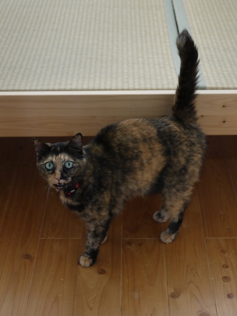 猫のお留守番 マチルダちゃん編。_a0143140_23035148.jpg