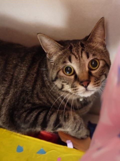 猫のお留守番 星尾くん編。_a0143140_23141231.jpg