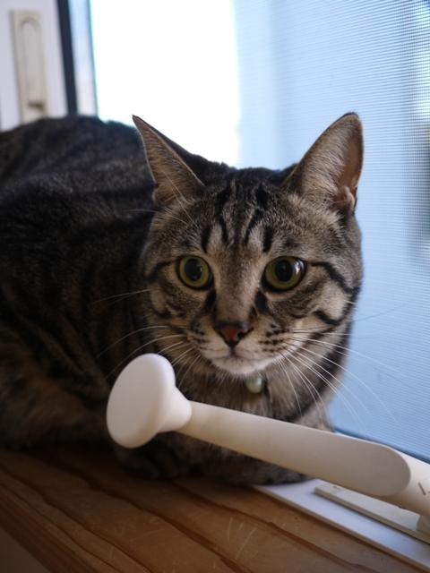 猫のお留守番 星尾くん編。_a0143140_23145616.jpg