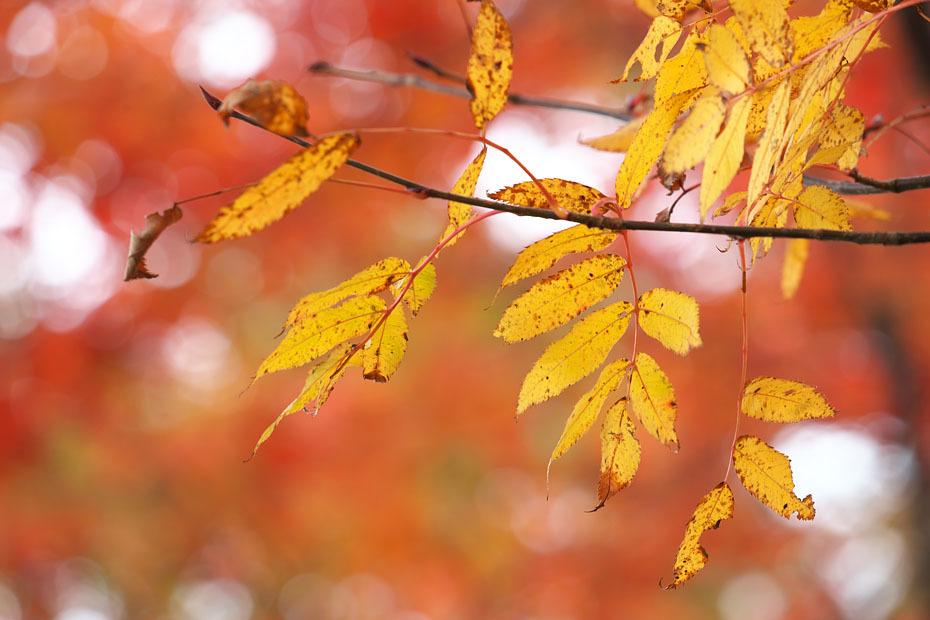 秋色重ね #1_c0067040_23282710.jpg
