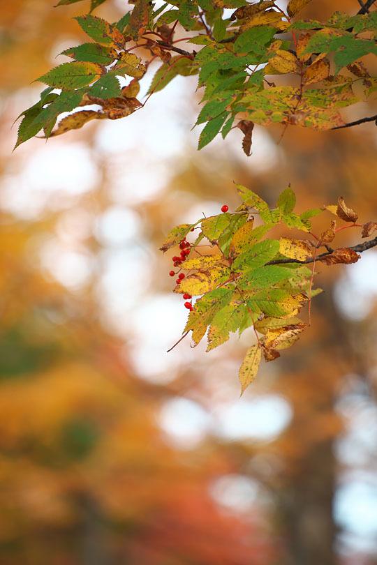 秋色重ね #1_c0067040_23283700.jpg