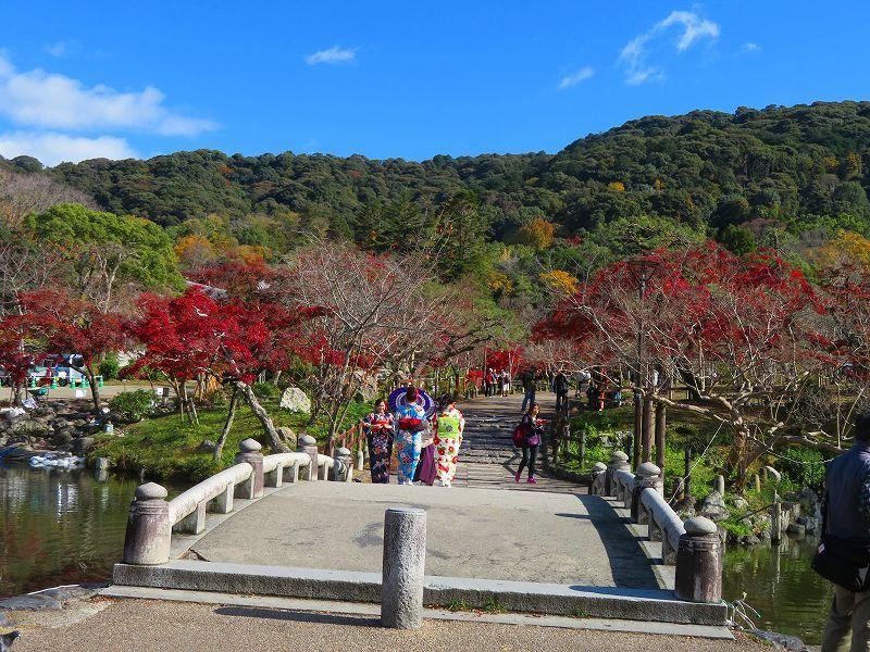 円山公園の紅葉20191129_e0237645_10592561.jpg