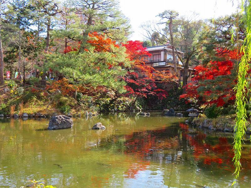 円山公園の紅葉20191129_e0237645_10592591.jpg