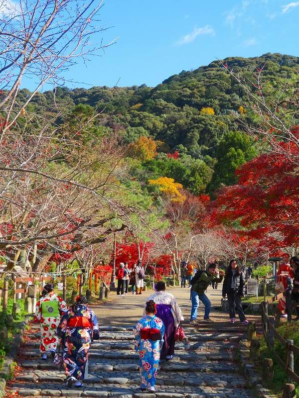 円山公園の紅葉20191129_e0237645_10592624.jpg