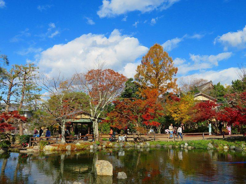 円山公園の紅葉20191129_e0237645_10592673.jpg