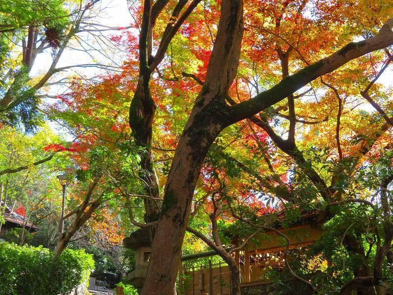 円山公園の紅葉20191129_e0237645_11001681.jpg