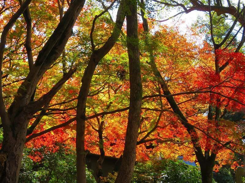 円山公園の紅葉20191129_e0237645_11001685.jpg