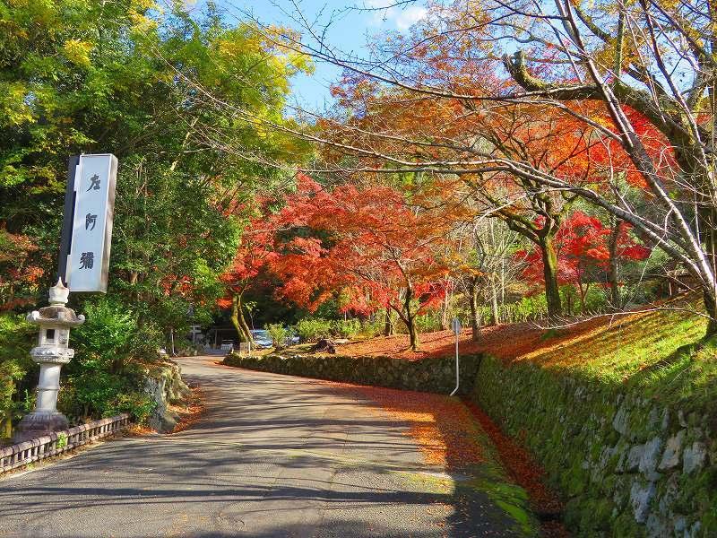円山公園の紅葉20191129_e0237645_11001691.jpg