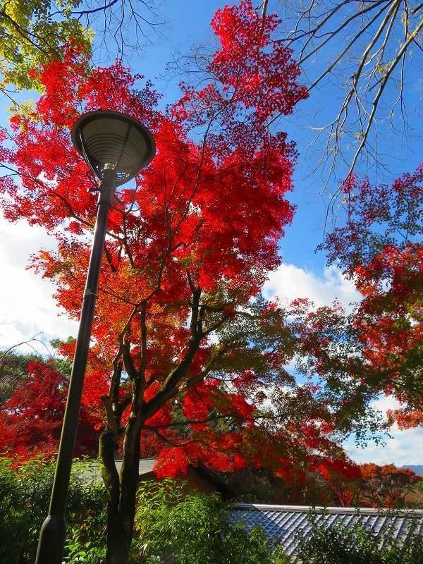 円山公園の紅葉20191129_e0237645_11001695.jpg