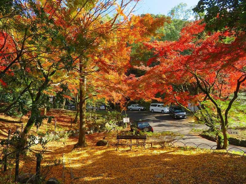 円山公園の紅葉20191129_e0237645_11001739.jpg