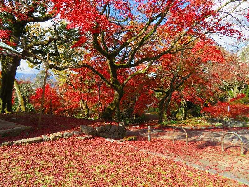 円山公園の紅葉20191129_e0237645_11011875.jpg