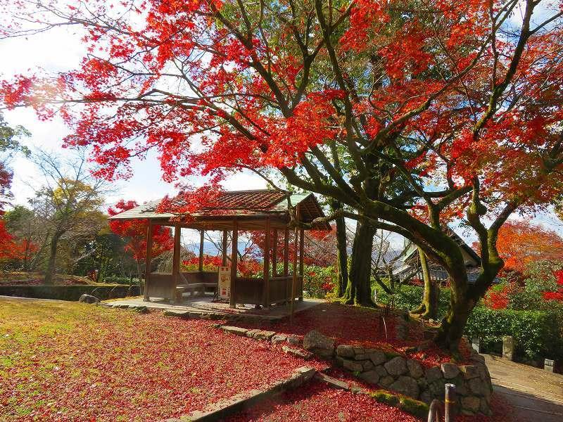 円山公園の紅葉20191129_e0237645_11011929.jpg