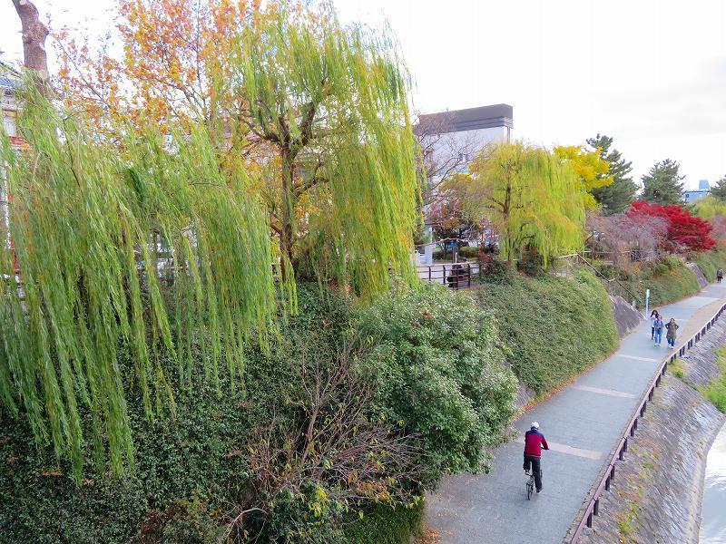 京都散策「南座と鴨川」20191129_e0237645_11151204.jpg