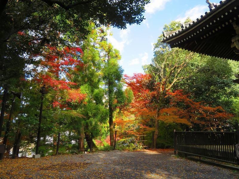 日本一「知恩院の鐘楼」20191129_e0237645_11234785.jpg