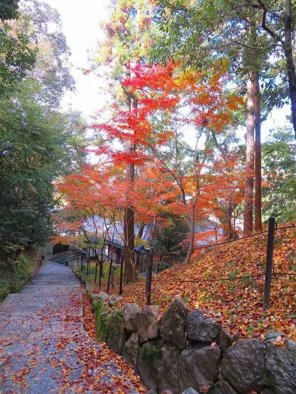 日本一「知恩院の鐘楼」20191129_e0237645_23220021.jpg