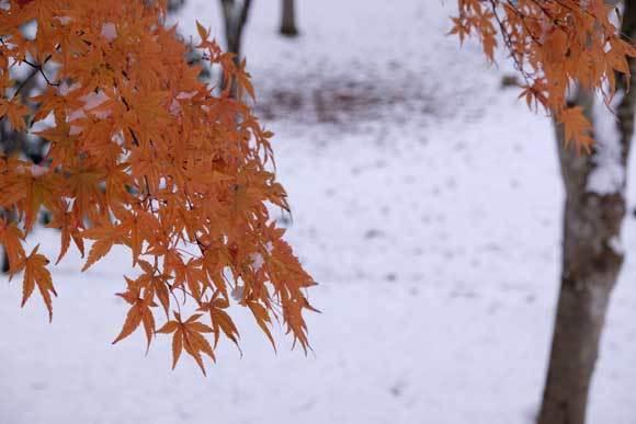 冬の散歩_e0220159_19173935.jpg