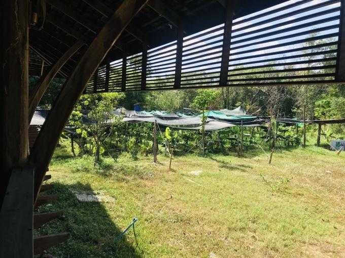 収穫仕立ての新ものコーヒー_b0100062_17270151.jpeg