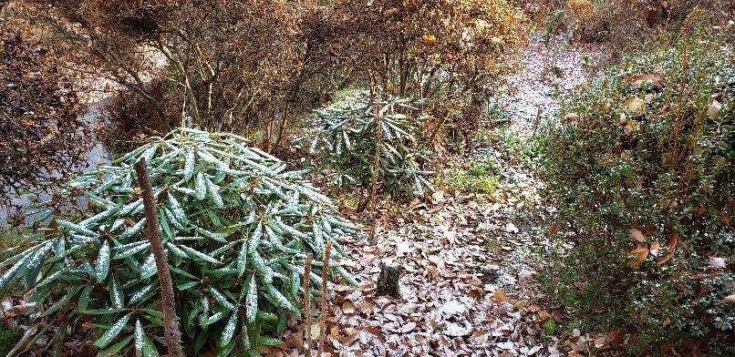 按針山荘初雪ですよ..._b0222066_08122977.jpg
