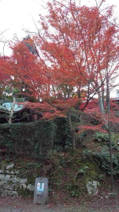 三井寺に行ってきた_b0018469_20341683.jpg
