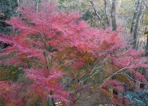 公園の紅葉もそろそろ見納めです_b0102572_14234288.jpg