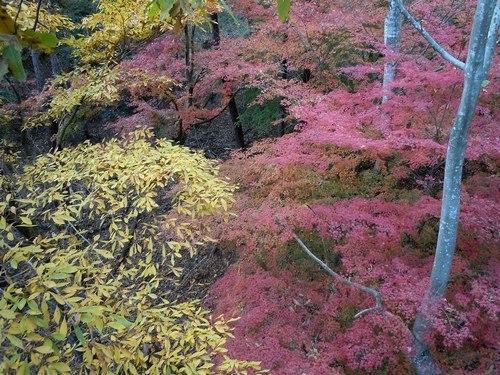 公園の紅葉もそろそろ見納めです_b0102572_14235828.jpg