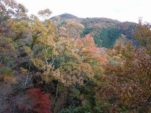 公園の紅葉もそろそろ見納めです_b0102572_14242307.jpg