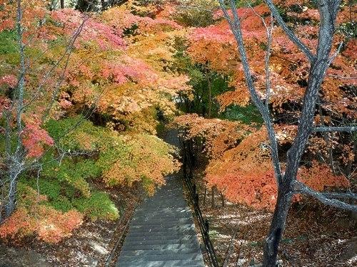 公園の紅葉もそろそろ見納めです_b0102572_14244431.jpg