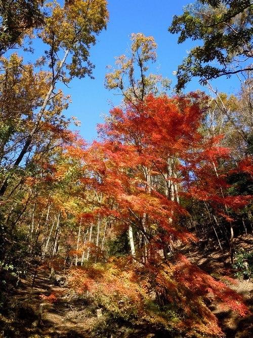 公園の紅葉もそろそろ見納めです_b0102572_14250273.jpg