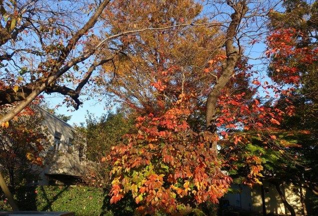 柿の木の下で_e0232277_14342569.jpg