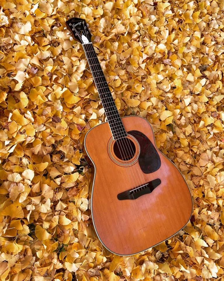 Ginkgo leaves_c0023278_19463849.jpg