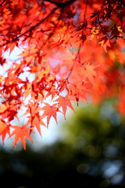 徳川園_f0367980_16362613.jpg