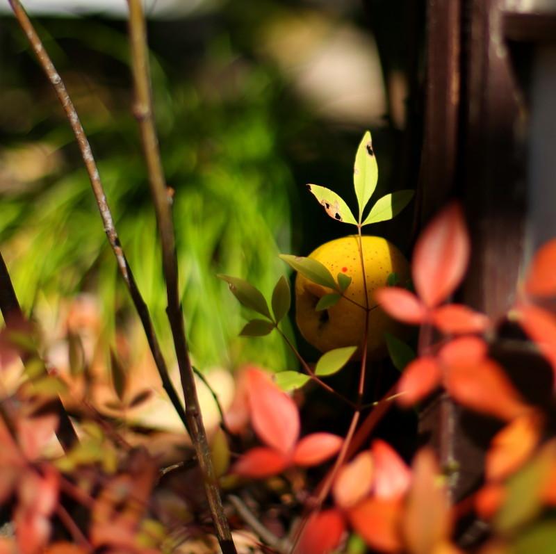 徳川園_f0367980_16371693.jpg