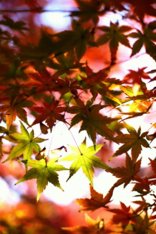 徳川園_f0367980_16385845.jpg