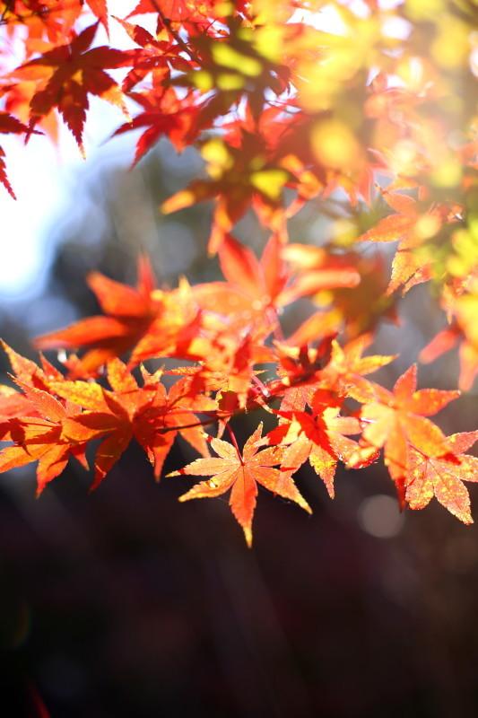 徳川園_f0367980_16392257.jpg