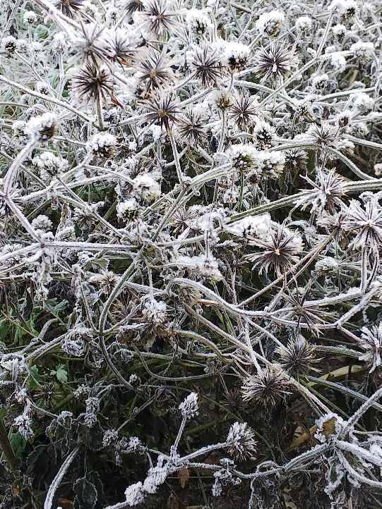 霜月最後の霜の朝_e0303187_23123569.jpg