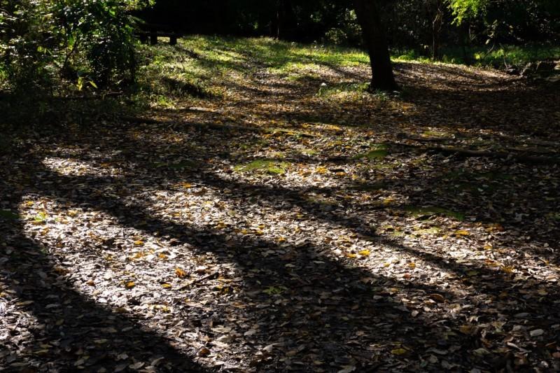 カメラと一緒、大好きな森へ_e0305388_16380783.jpg