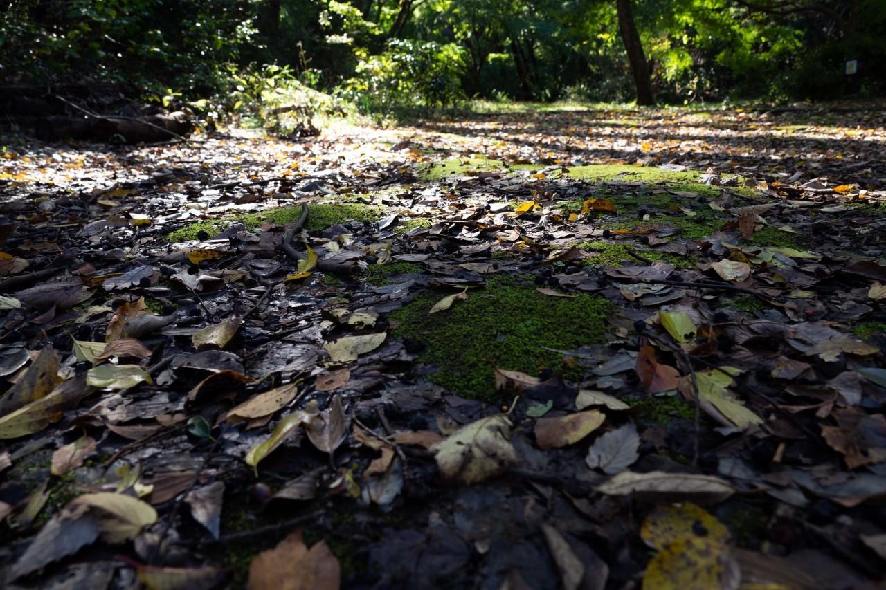 カメラと一緒、大好きな森へ_e0305388_16381040.jpg