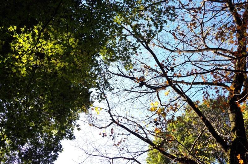 カメラと一緒、大好きな森へ_e0305388_16381476.jpg