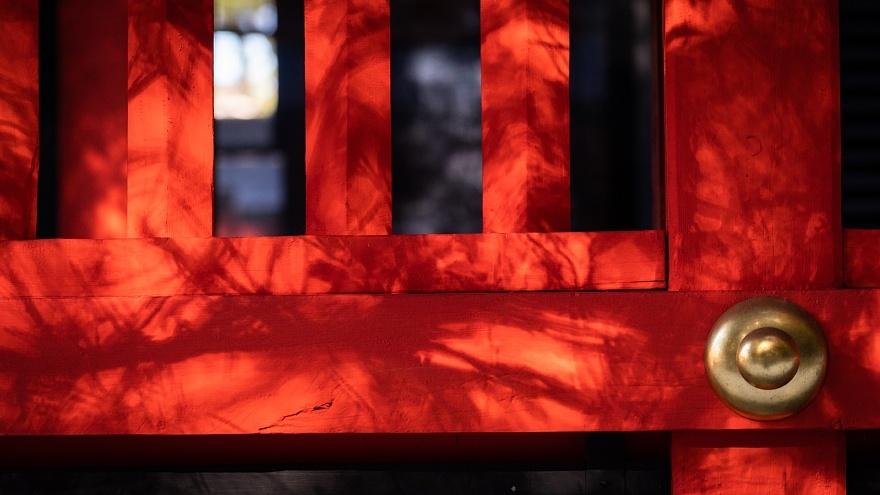 赤い神社に棲む光蜥蜴_d0353489_15292418.jpg