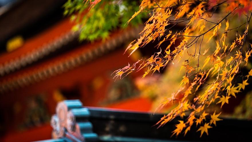 赤い神社に棲む光蜥蜴_d0353489_15292450.jpg