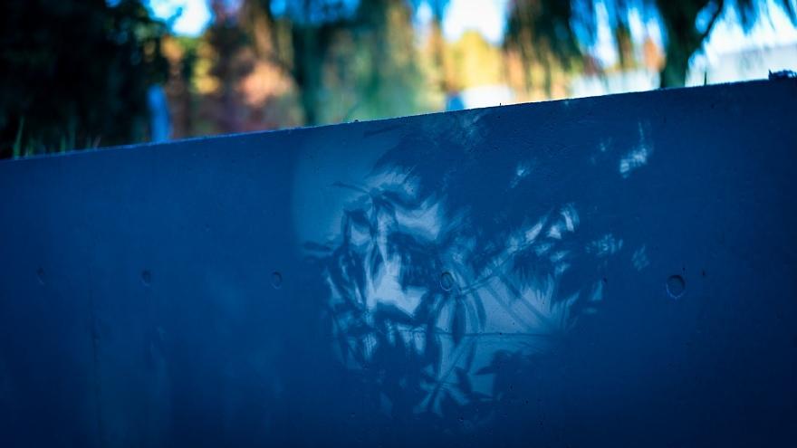 旬の味わいの青い光蜥蜴_d0353489_15471850.jpg