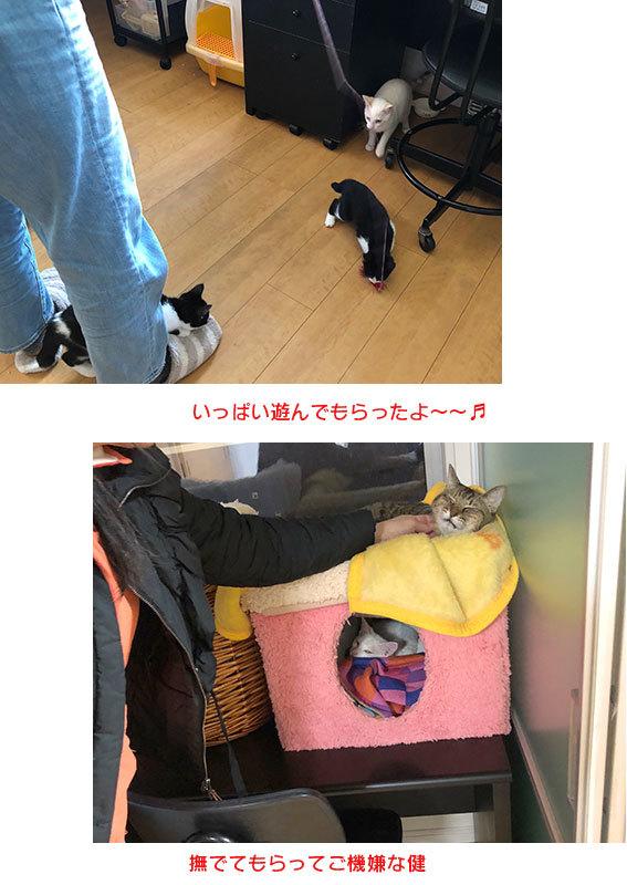 面会のお客様♬&フリマ品・子猫ドライありがとう〜!&おなか空いた大合唱_d0071596_22090059.jpg