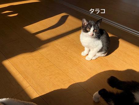 面会のお客様♬&フリマ品・子猫ドライありがとう〜!&おなか空いた大合唱_d0071596_22483623.jpg