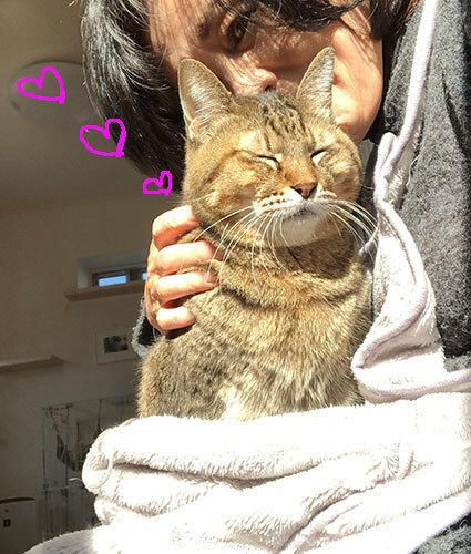 面会のお客様♬&フリマ品・子猫ドライありがとう〜!&おなか空いた大合唱_d0071596_22500047.jpg