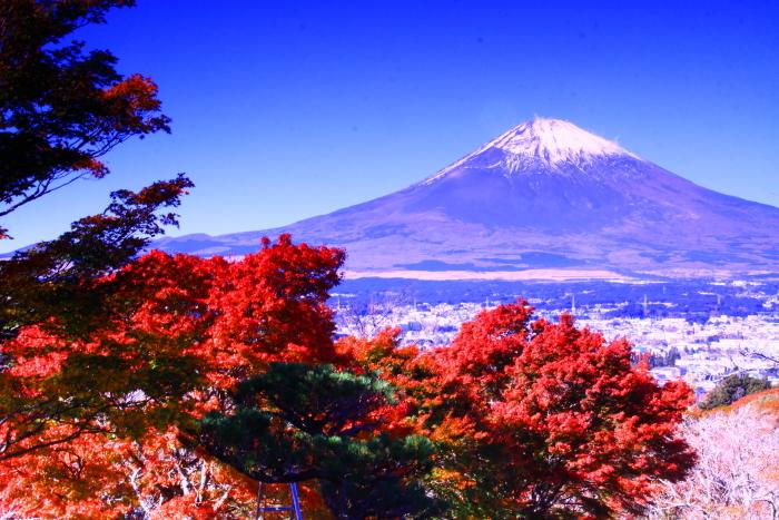 令和元年11月の富士(21)御殿場平和公園からの富士_e0344396_21243836.jpg