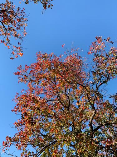 紅葉しました。_b0105897_02211381.jpg