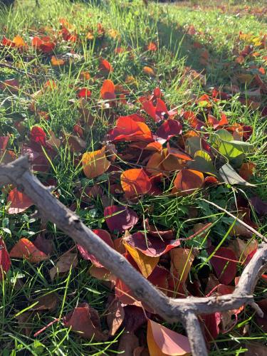 紅葉しました。_b0105897_02211416.jpg