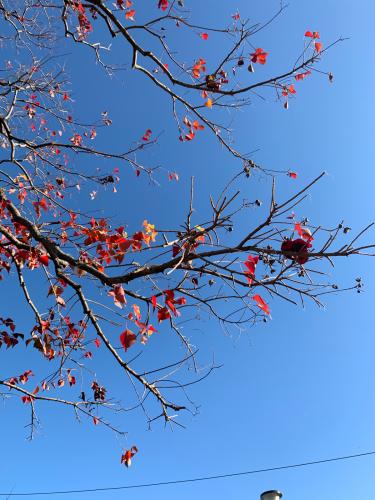 紅葉しました。_b0105897_02211525.jpg